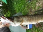 15lbs 1oz Pike from river idle. got this pike after it was peseting me when catching silver fish.