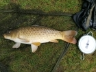 Wally Pickering 14lbs 2oz Common Carp. fishing tetney   jamies campsite  got this common carp on 16 mm hard pellet..