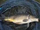 3lbs 3oz Mirror Carp from Tackeroo using Pyramid tutti frutti.