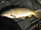 Glyn Jones 6lbs 13oz Common Carp from Turf pool using Mainline Cell.