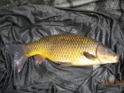 4lbs 7oz Common Carp from Tackeroo using Mainline Fusion.