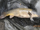 Glyn Jones 7lbs 1oz Common Carp from Turf pool using Mainline Fusion.