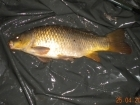 5lbs 14oz Common Carp from Turf pool using Mainline Grange CSL.