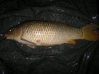 Michael Harding 14lbs 9oz Common Carp, Mainline Fusion.