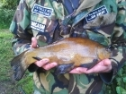 Clive Wells 3lbs 1oz Tench from Kingfisher Lakes. Caught on multi red maggots