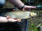 Dan Glover 2lbs 6oz Chub from River Penk