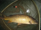 Stuart Andrew Potts 7lbs 0oz Common Carp from Maythorne Fisheries using Asda tiger bread.. Surface fishing two rod lengths out with controller float about 6ft to size 6 hook