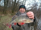 3lbs 0oz perch from Sweet Chestnut Lake. After coming very close to my winter perch target of 3lb, with a differant 2lb 14oz specimen, 10 days ago, I finally hit the magic 3lb barrier with this