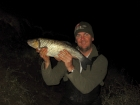 5lbs 8oz Chub from River Severn. Source Boilie