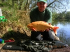 6lbs 13oz Golden Orfe from Private Lake. One of my best Specimen Captures
