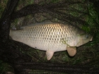 10lbs 0oz Common Carp from Finger Pool using Carp Company Icelandic Red Cranberry & Caviar.